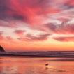 pink beach short